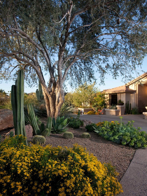 Backyard desert landscaping home design ideas pictures for Desert landscape
