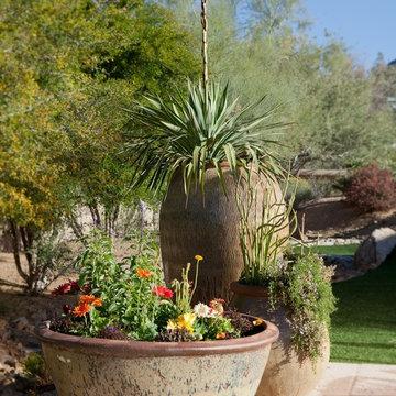 African Patio and Garden