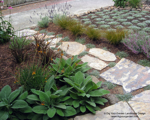 Lawn replaced with ground cover surrounded by colorful for Garden design mill valley