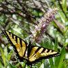 9 Flowers That Draw Butterflies