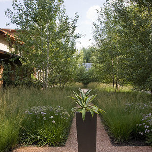 Photo of a contemporary backyard gravel landscaping in Chicago.