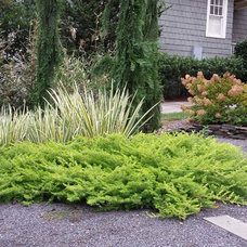 Contemporary Landscape by Jay Sifford Garden Design