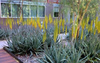 Great Design Plant: Aloe Vera