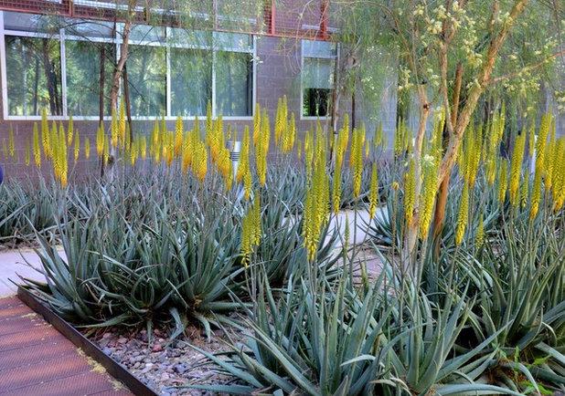 Garden by Noelle Johnson Landscape Consulting