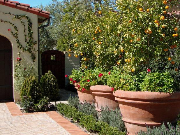 Mediterran Garten by AMS Landscape Design Studios, Inc.