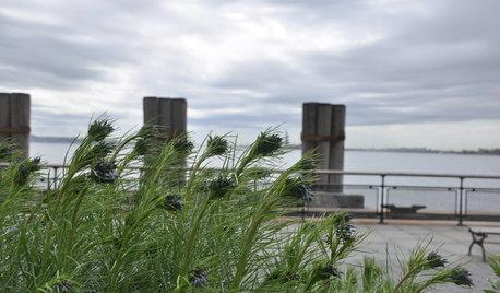 Great Design Plant: Hubricht's Bluestar