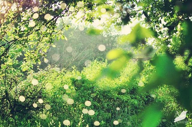Eclectic Landscape by Amy Renea