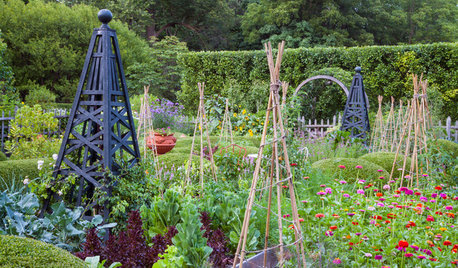 How to Grow Your Own Sweet Summer Crops