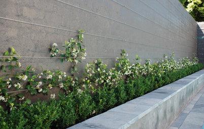 Rankhilfen und Gerüste für Kletterpflanzen im Garten