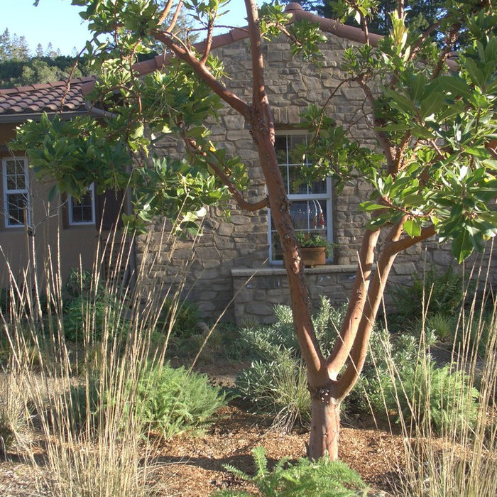 California Native Garden with an Italian Twist