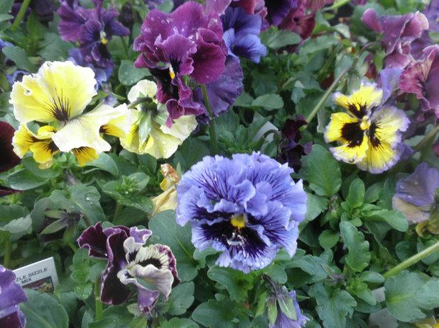 トラディショナル 庭 by Ganim's Garden Center and Florist, LLC