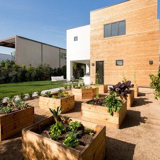 Großer Moderner Kiesgarten hinter dem Haus mit Kübelpflanzen und direkter Sonneneinstrahlung in Los Angeles