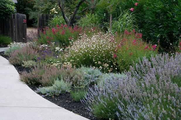 8 plantas de exterior resistentes al sol que te interesa Plantas jardin mediterraneo