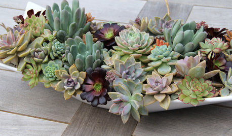 10 Ways to Make Magic With Succulent Centerpieces