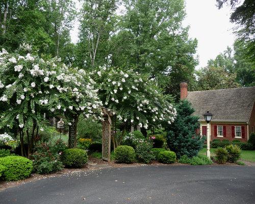 Crepe Myrtle Landscaping | Houzz