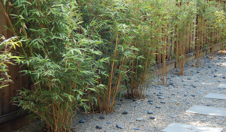 34 ideas for privacy in the garden with a decorative.htm neighbor s invasive bamboo  neighbor s invasive bamboo