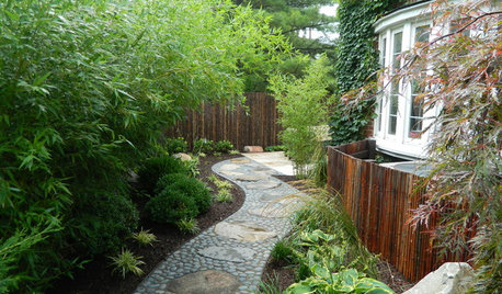 Grow a Lush Privacy Screen