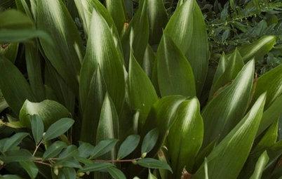 7 Evergreen Wonders of the Plant World