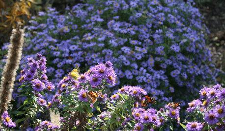 15 Native Flowers That Attract Butterflies