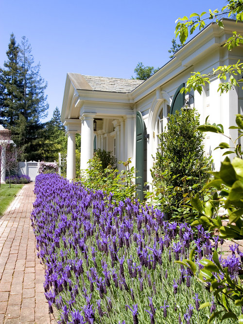 front yard sweeps lavender ideas  pictures  remodel and decor