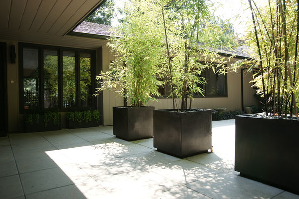 Modern Landscape by Creative Garden Spaces
