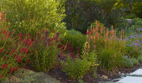 Pep Up the Garden With Shades of Red