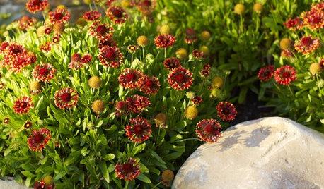 Great Design Plant: Blanket Flower Brings Year-Round Cheer