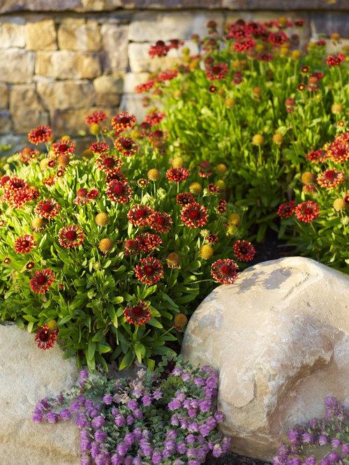 Top 10 Flowering Shrubs Weigela