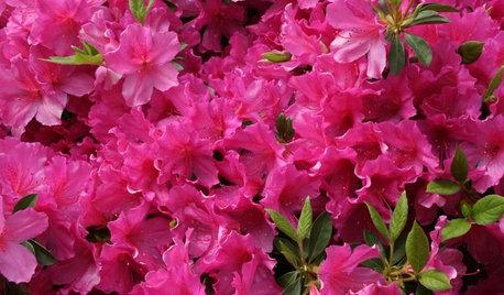 Southeast Gardener's April Checklist