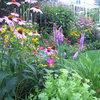 Undvik misstagen i vårträdgården – här är experternas råd
