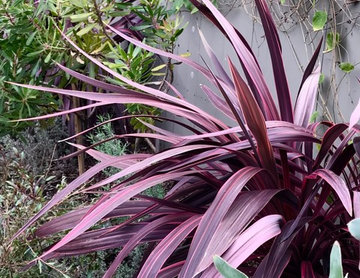 Backyard South African, Costa Rican, and New Zealand plantings.