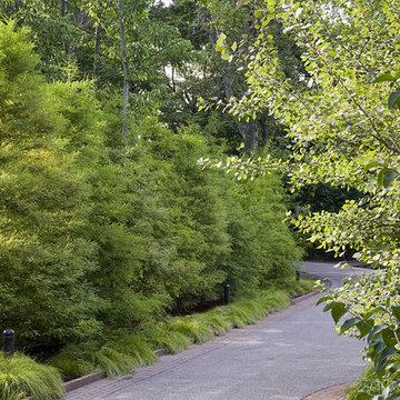 Bald Cypress Hedge