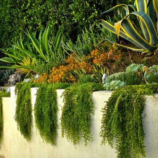 Inspiration for a small tropical partial sun side yard landscaping in Los Angeles.