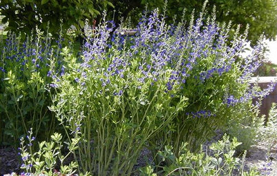 5 Great Plants for Borders and Screens