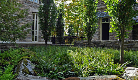 Great Design Plant: Woodland Garden Beauty Polystichum Acrostichoides