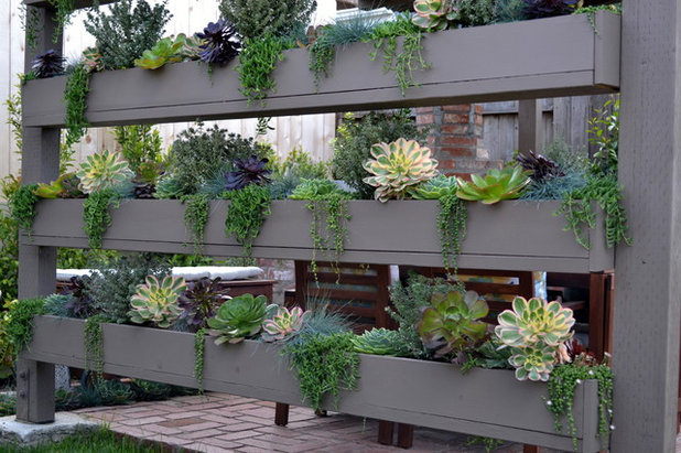 Succulents in containers the ultimate easy care mini garden for Ultimate landscape design