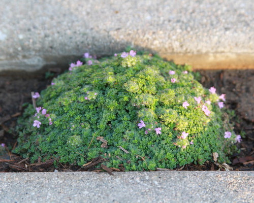 Coastal garden design ideas renovations photos with a for Medium sized rocks for landscaping