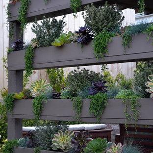 Kleiner Moderner Garten hinter dem Haus mit Pflanzwand in Orange County