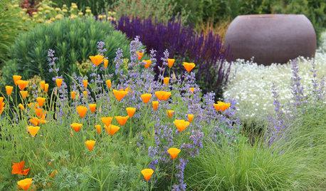 Guida Houzz: Accostare i Colori in Giardino Evitando i Cliché
