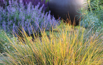 Add Softness, Light and Movement With Ornamental Grasses
