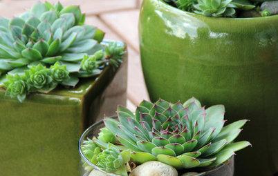 Perché Scegliere il Vaso Giusto È un Gesto d'Amore per le Piante