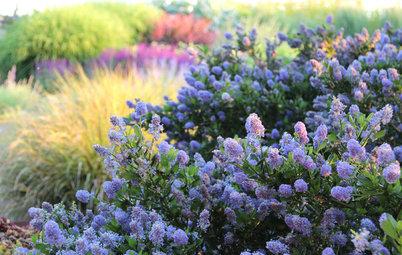Get the Look: Untamed, Naturalistic Garden Style