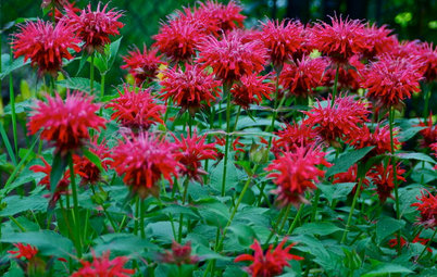 10 Deer-Resistant Native Flowers to Plant This Fall