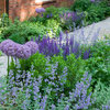 Create a Wow Garden With the Colour Purple