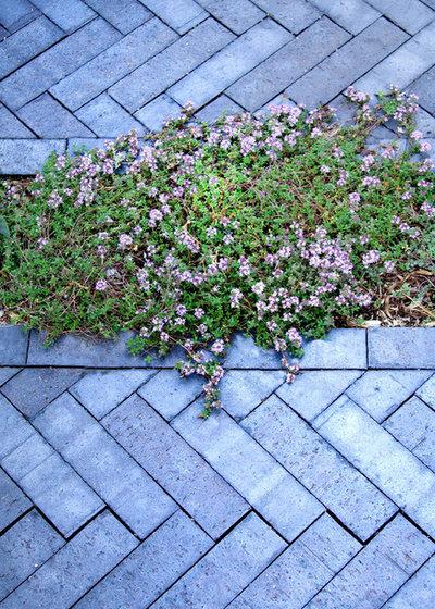Modern Garten by Matthew Cunningham Landscape Design LLC