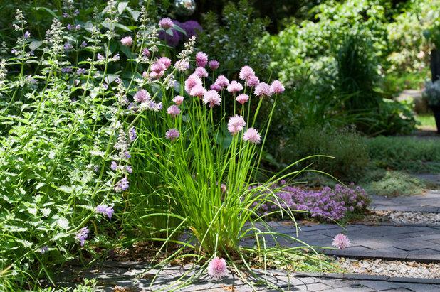 Kräutergarten anlegen und abwechslungsreich bepflanzen