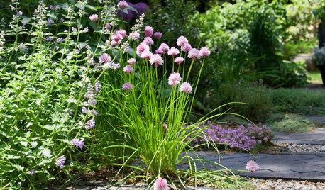 8 Surefire Vegetables and Herbs for Beginning Gardeners