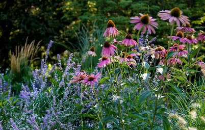 15 Inspiring Summer Gardens in All Their Colorful Glory