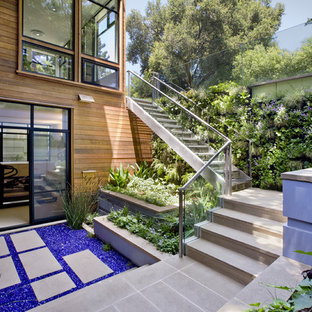 Photo of a contemporary backyard landscaping in San Francisco.