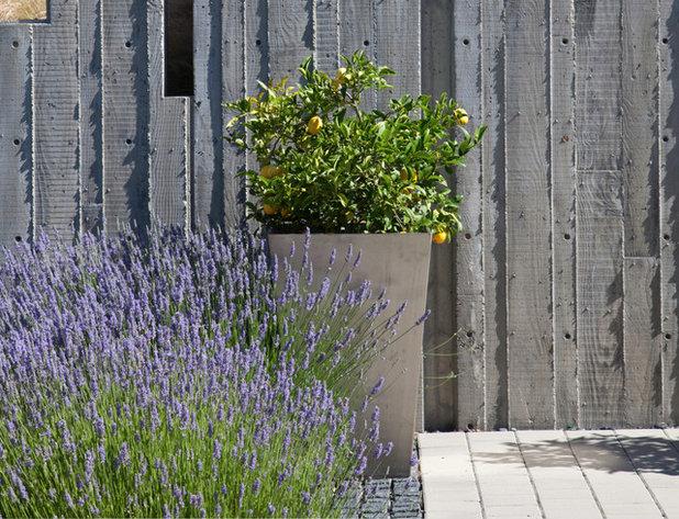 コンテンポラリー 庭 by WA Design Architects